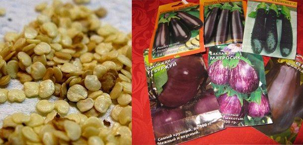 баклажаны подготовка семян