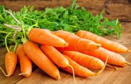 Посадка и выращивание моркови в открытом грунте