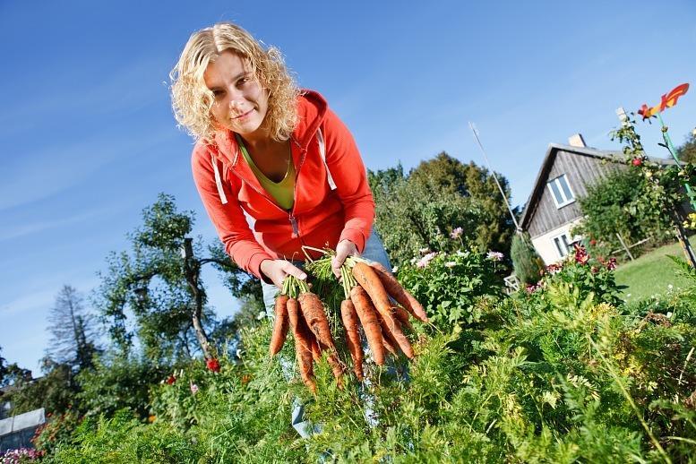 Посадка моркови семенами весной в открытый грунт