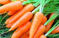 Лучшие сорта моркови: ранние, средние, среднепоздние и поздние