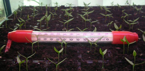 семена всхожесть увеличение