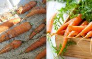 Как правильно хранить морковь зимой в погребе