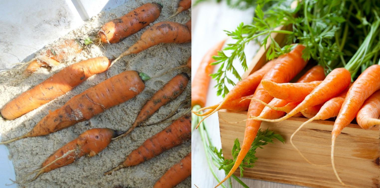 Морковка в домашних условиях на зиму