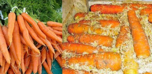 польза моркови для детей