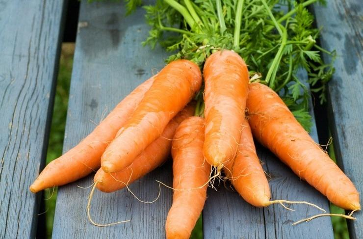 Польза и вред моркови для организма человека