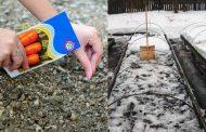Посадка моркови под зиму: когда и как сеять