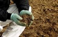 Чем удобрять кабачки перед посадкой в открытый грунт