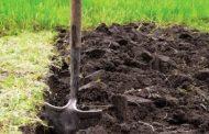 Сезонные внесения удобрений для моркови при посадке - советы специалистов