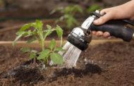 Делимся секретами, как поливать рассаду помидор, чтобы растения развивались наилучшим образом