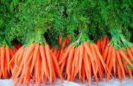 Как посеешь - так и пожнешь: раскрываем главный секрет, как получить хороший урожай моркови